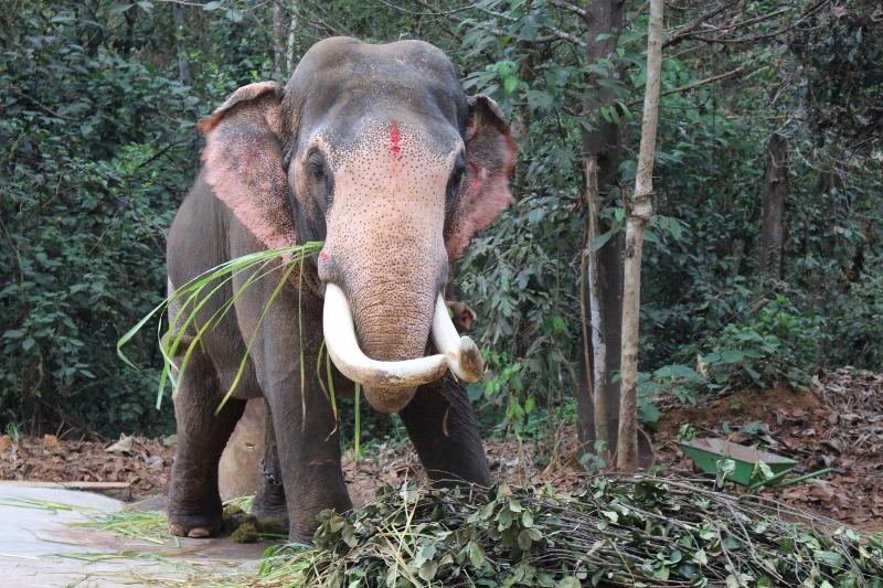 VIDA Statement Bag - Jungle Elephant Temple by VIDA 0gnDoYc